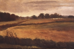 Brown Field With Sheep