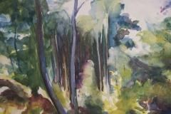 Wivenhoe Woods