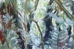 Wivenhoe Woods 2